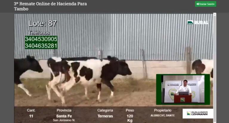 Remate de la Lehmann: Vacas y vaquillonas pegaron un salto