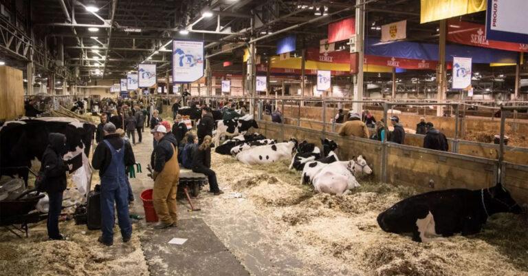 Canadá: Suspenden la Royal Winter Fair 2020