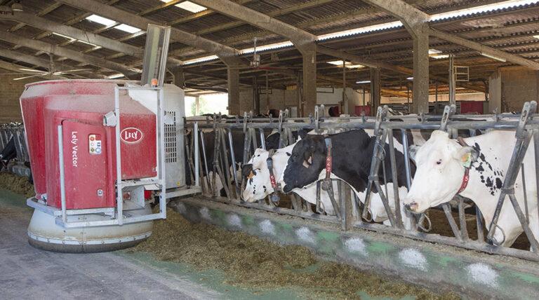 España: Robotización para mejorar el bienestar animal y del ganadero