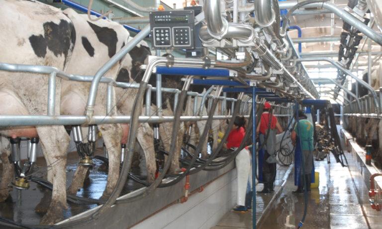 Septiembre: El aumento del precio de la leche será de 30 centavos