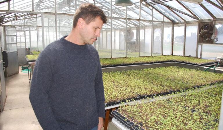 La alfalfa, una de las claves de la competitividad del tambo