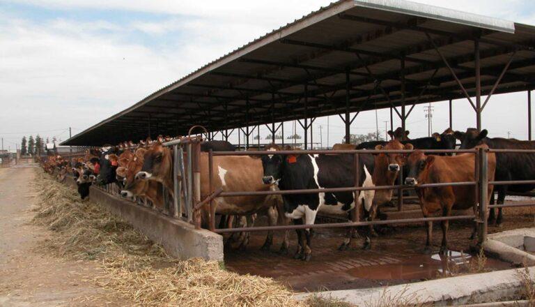 Estados Unidos: La mayoría de los establecimientos lecheros siguen siendo familiares