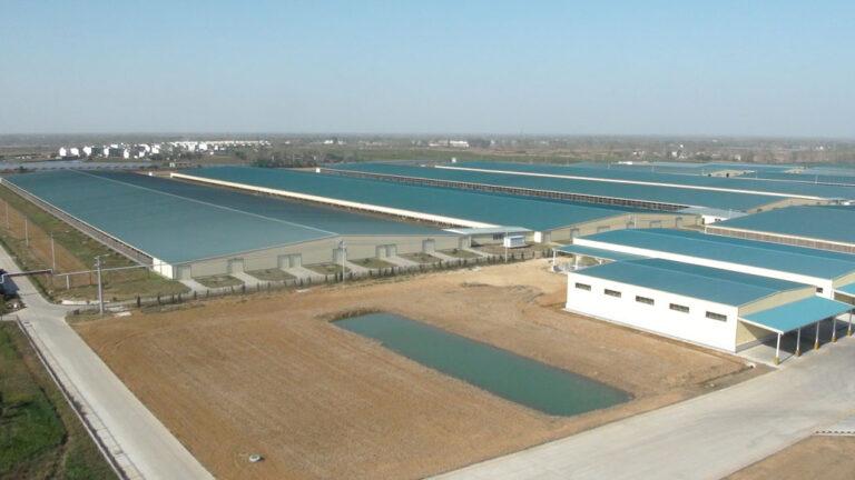China: nueva estrategia nacional en la producción láctea
