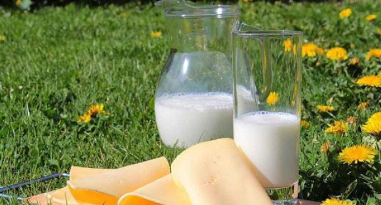 Cómo conseguir lácteos más saludables cambiando la alimentación del ganado lechero