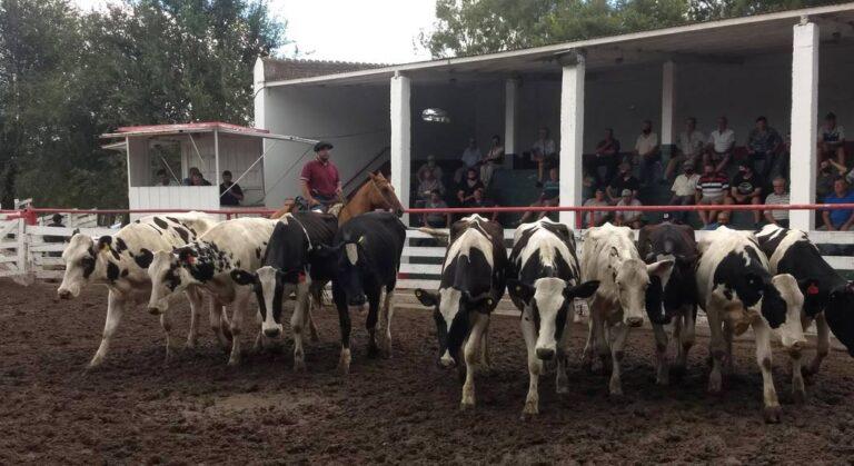 Dos remates en Córdoba confirman mucho interés por la vaquillona de tambo