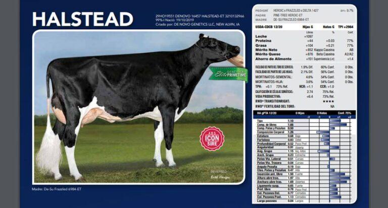 El ranking ACHA revela las mejores opciones genéticas para toros Holstein