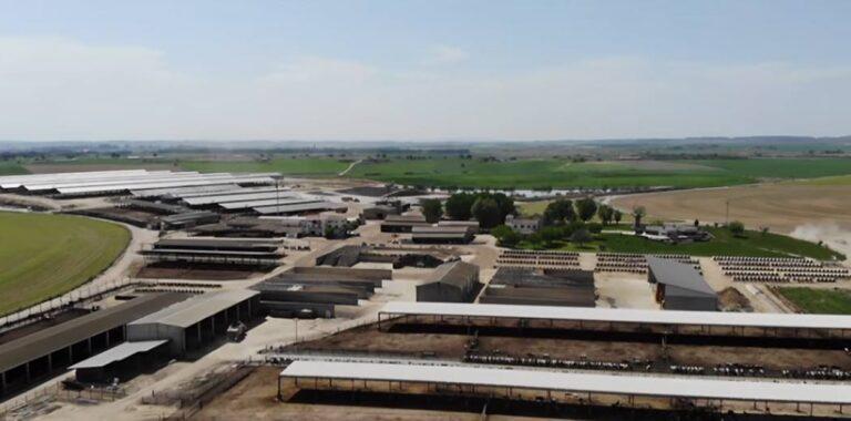 España: Proponen limitar la cantidad de vacas de las lecherías