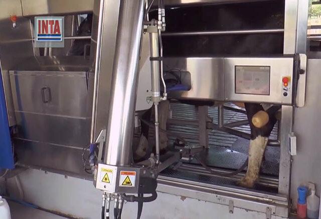Junio 2021: El tambo robot del Inta Rafaela promedió 35 litros por vaca